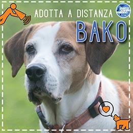 bako-evidenza