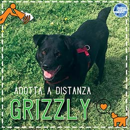 grizzly_evidenza