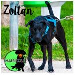 Zoltan