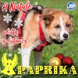 adozioni_parcocanile-paprika-miniatura