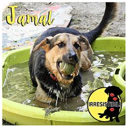 jamal-evidenza