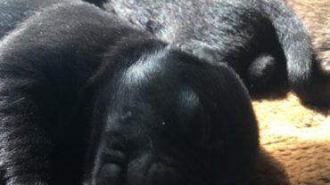 cuccioli-1